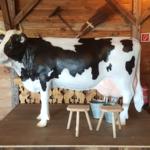 wettmelken kuh mieten muenchen